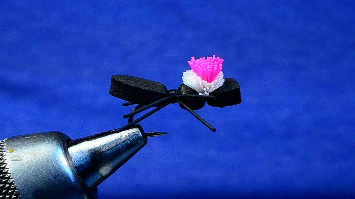Sno Ball Beetle
