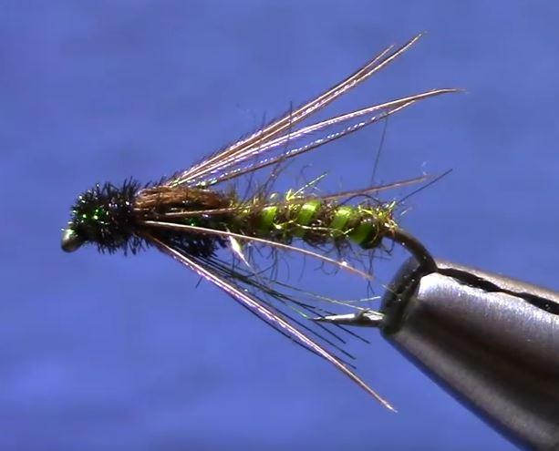soft hackle caddis pupa