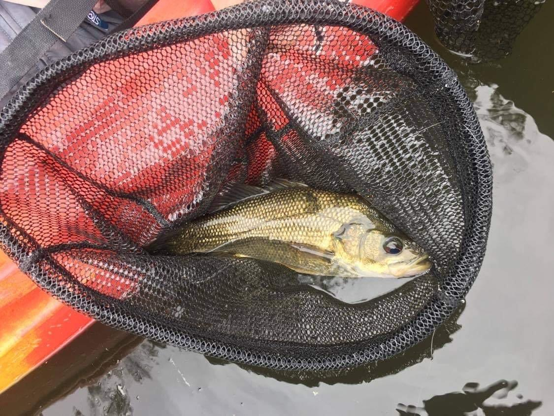 Ron's bass, caught at an exploratory trip to Shute Hill